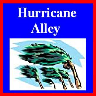 Hurrucane Alley Palm Tree logo